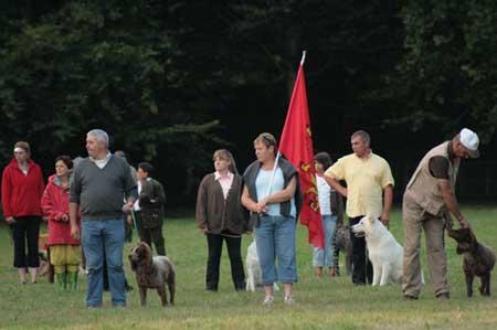 défilés de chiens