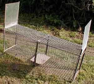 la cage fauve dit chati re. Black Bedroom Furniture Sets. Home Design Ideas